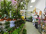 Диантус на Пролетарской, цветочный магазин